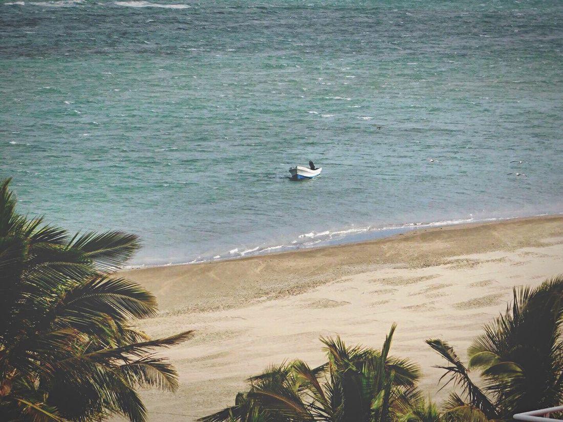 Hotel Fiesta Americana Nikon Boca Del Rio Veracruz Mar Palm Trees