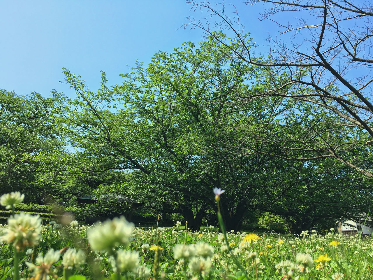 growth, nature, flower, tree, beauty in nature, tranquility, day, plant, outdoors, freshness, fragility, no people