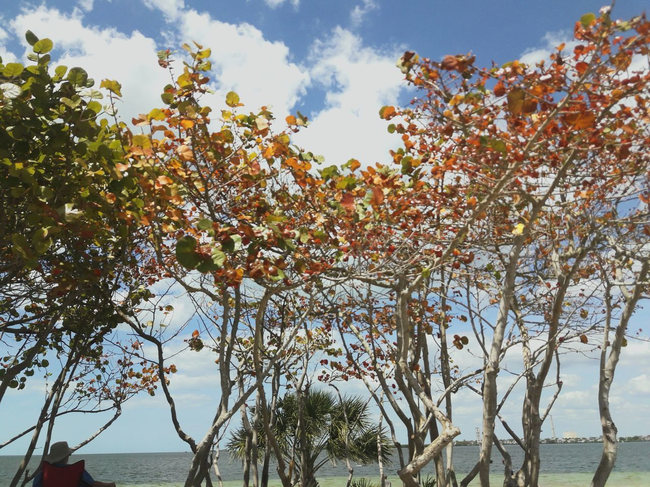 tree, beauty in nature, nature, branch, sky, growth, day, outdoors, scenics, tranquil scene, no people, tranquility, low angle view, foreground, sea, water, freshness