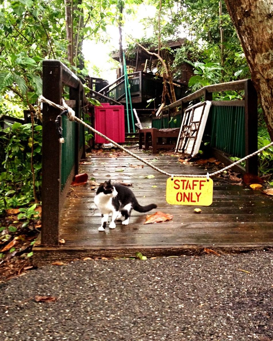 Staff Only Keep Out Cat Tropics Rainy Day Liquid Sunshine Jamaica Cats Of EyeEm Catching A Moment In The Moment Aware Caribbean Parks Stray Cat Bestpic EyeEm Best Shots Check This Out EyeEm Best Shots - Everything Wet EyeEm Best Shots Cats Timing