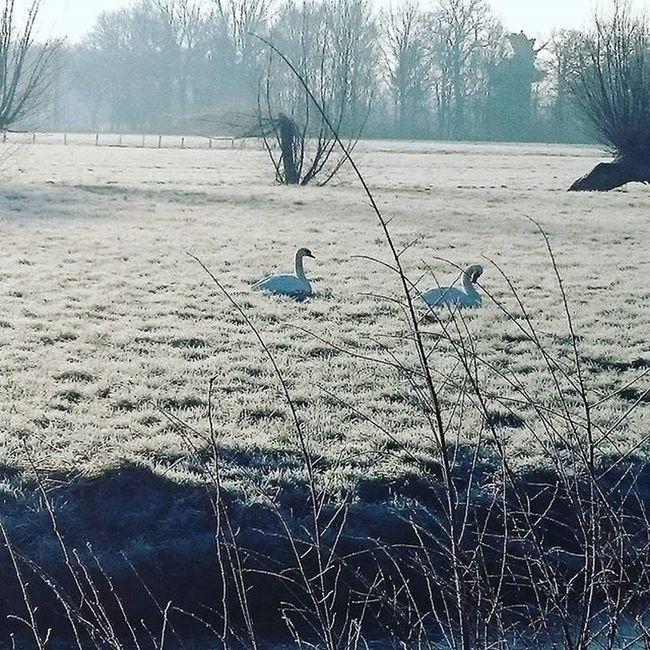 Good morning World Nature Beauty Wintertime Swaen Pictures Instamoment Instaworld Beautyofnature
