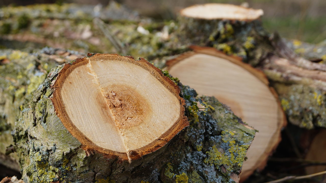log, timber, deforestation, lumber industry, tree ring, stack, woodpile, forestry industry, wood - material, environmental issues, tree stump, nature, tree trunk, close-up, textured, no people, outdoors, focus on foreground, day, tree, axe