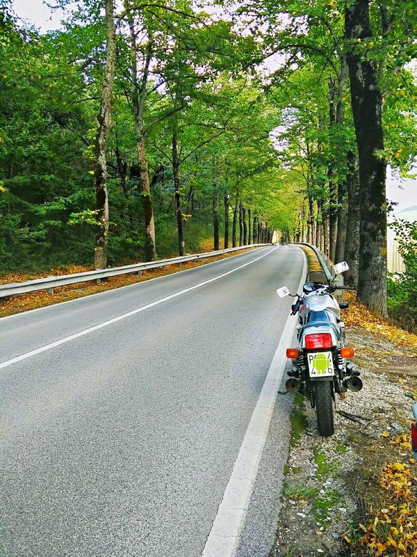 Sunday Ride. Motorcycles Motorcycle Suzuki Sunday Ride Happy Autumn Nature_collection Trees On The Road September