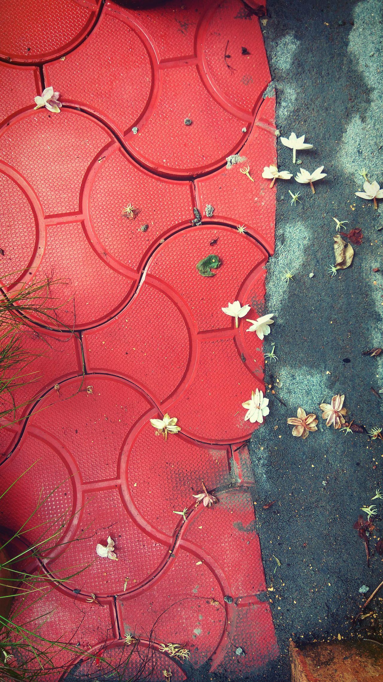 Jasmine Flower Pavement Tiles Home