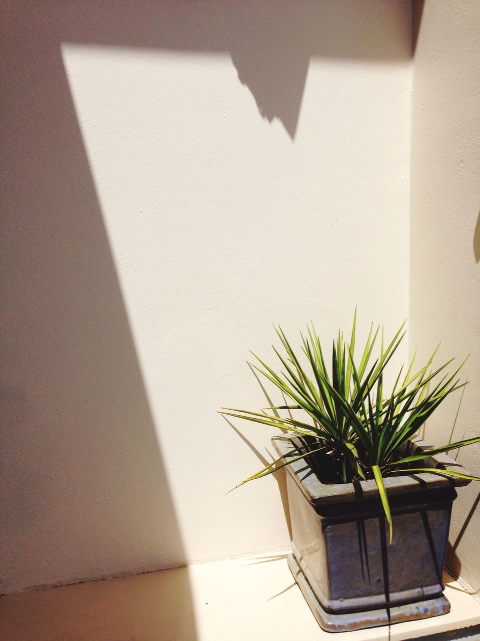 shadow, sunlight, potted plant, architecture, built structure, growth, no people, indoors, plant, day, building exterior, nature, whitewashed, close-up