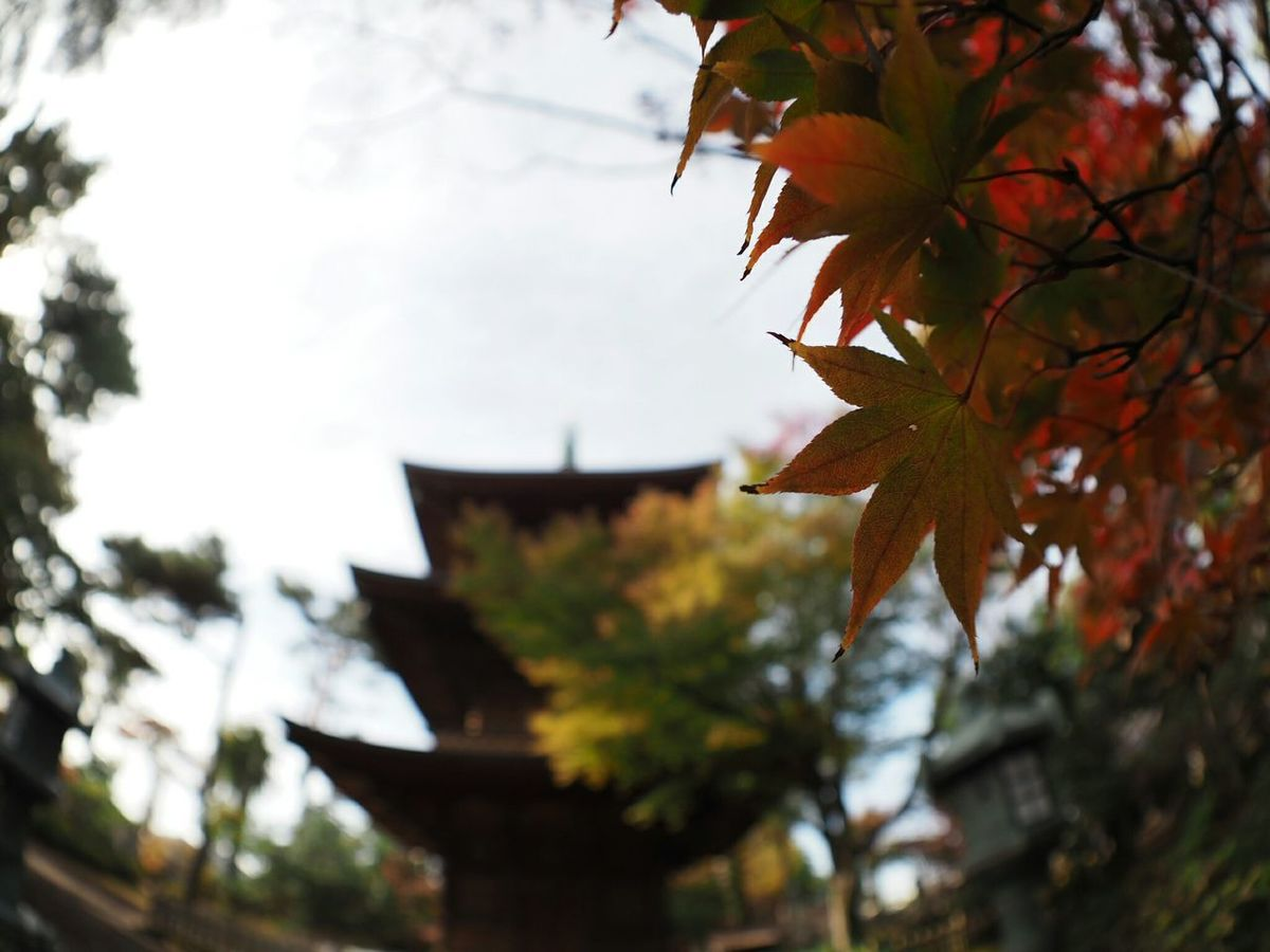 Olympus Om-d E-m10 Japanese Temple Colors Of Autumn Walking Around Autumn Colors Autumn Leaves Architecture From My Point Of View Taking Photos Relaxing Light And Shadow Autumn EyeEm Nature Lover Gotokuji