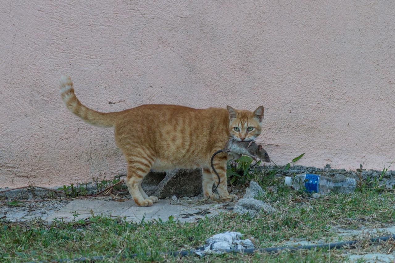 Animal Themes Cat,  Holidays Katze Malaysia No People Outdoors Tioman Tioman Island Natur Nature