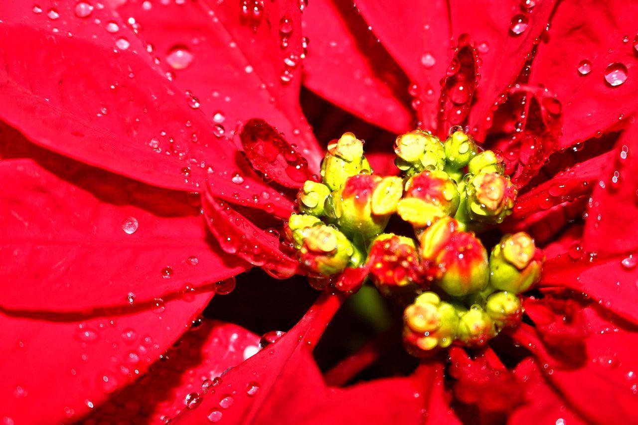 Fllower flower。 Red Vi vivid