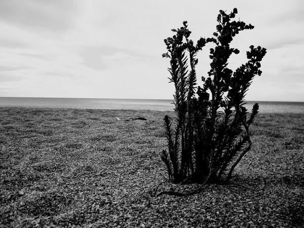 lonely plant Blackandwhite Simplicity Lone Plant Plant
