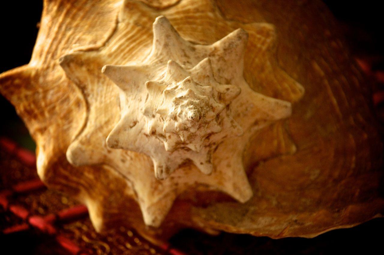 Estrella muerta Caracol Snail Caparazon Concha  Shell Star Estrella Dead Muerta Estrellamuerta Deadstar