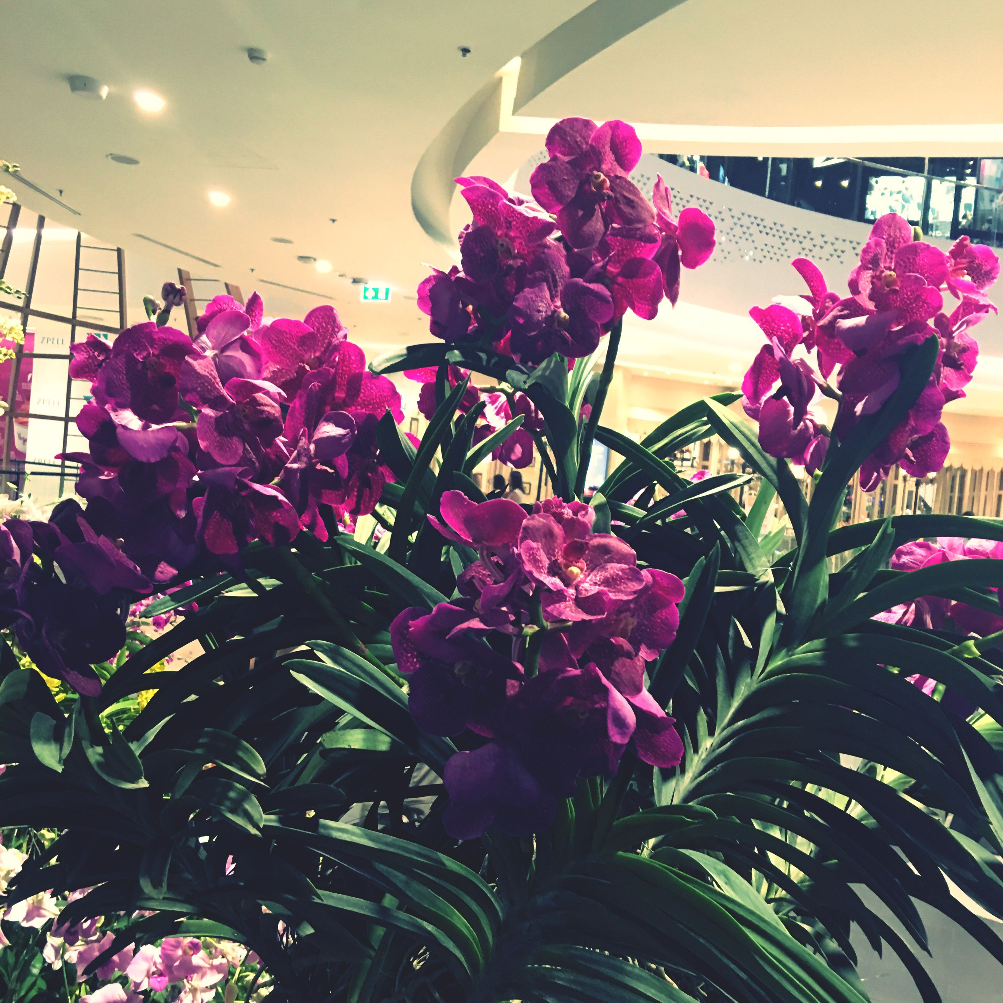 flower, freshness, growth, fragility, indoors, pink color, petal, beauty in nature, in bloom, plant, leaf, close-up, nature, springtime, flower head, purple, bunch of flowers, botany, green color, blooming, vibrant color, blossom, cultivated, growing