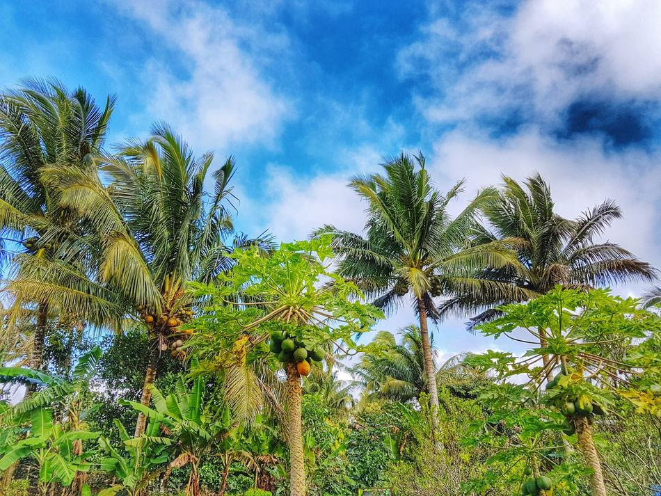 Tree Growth Nature Green Color Sky Outdoors Freshness Justphotography Nature Photography TravelPhilippines Travelph Travel Photography Art Is Everywhere