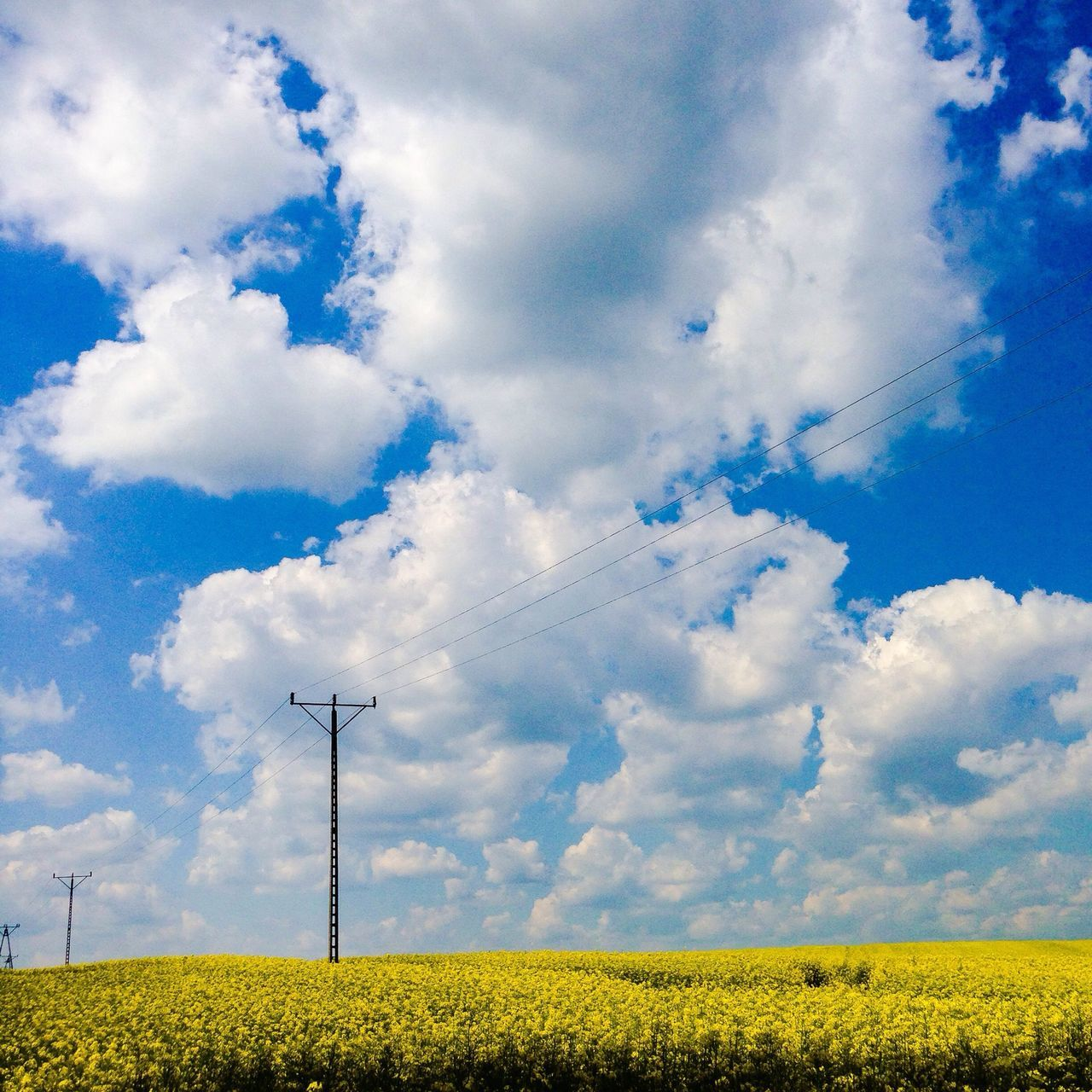 Telephone line passing through agricultural field
