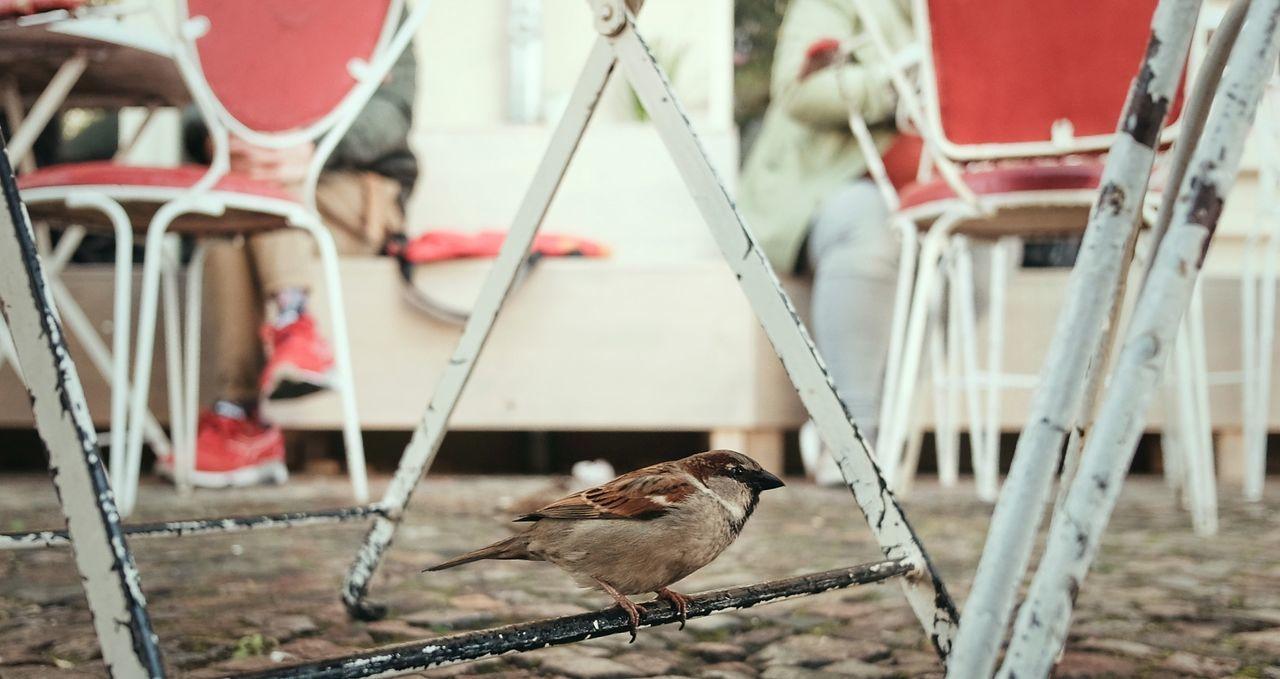 Bird Outdoors Urban Spring Streetphotography City Life Animal Themes No People