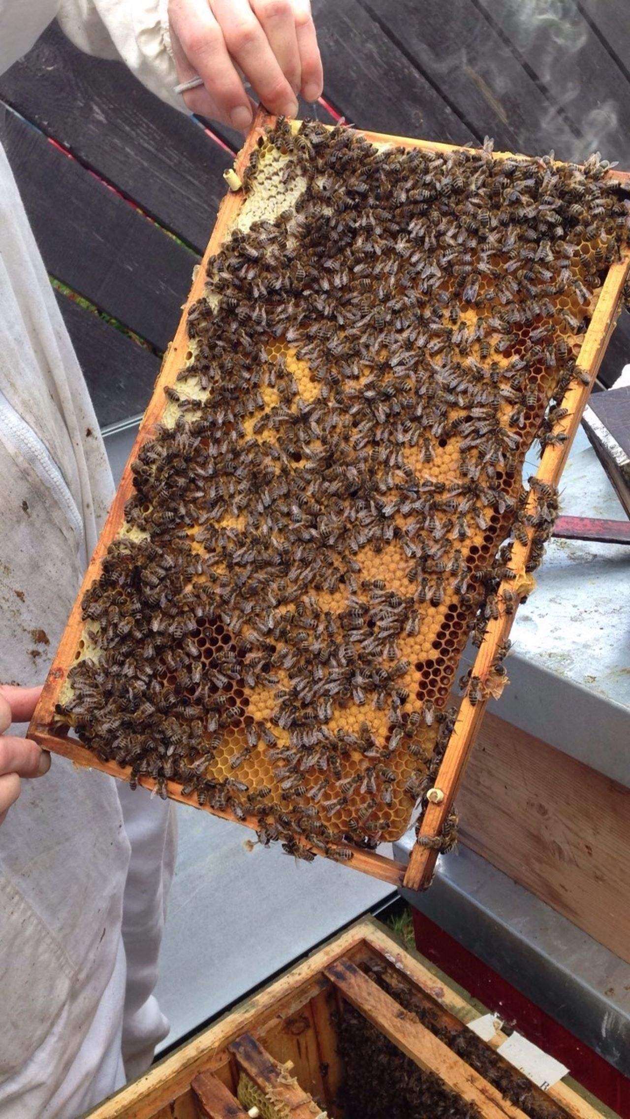 APIculture Bee Honeycomb Broodframe Beehive Beekeeper Colony Beekeeping Pollination Honey Abeille Miel