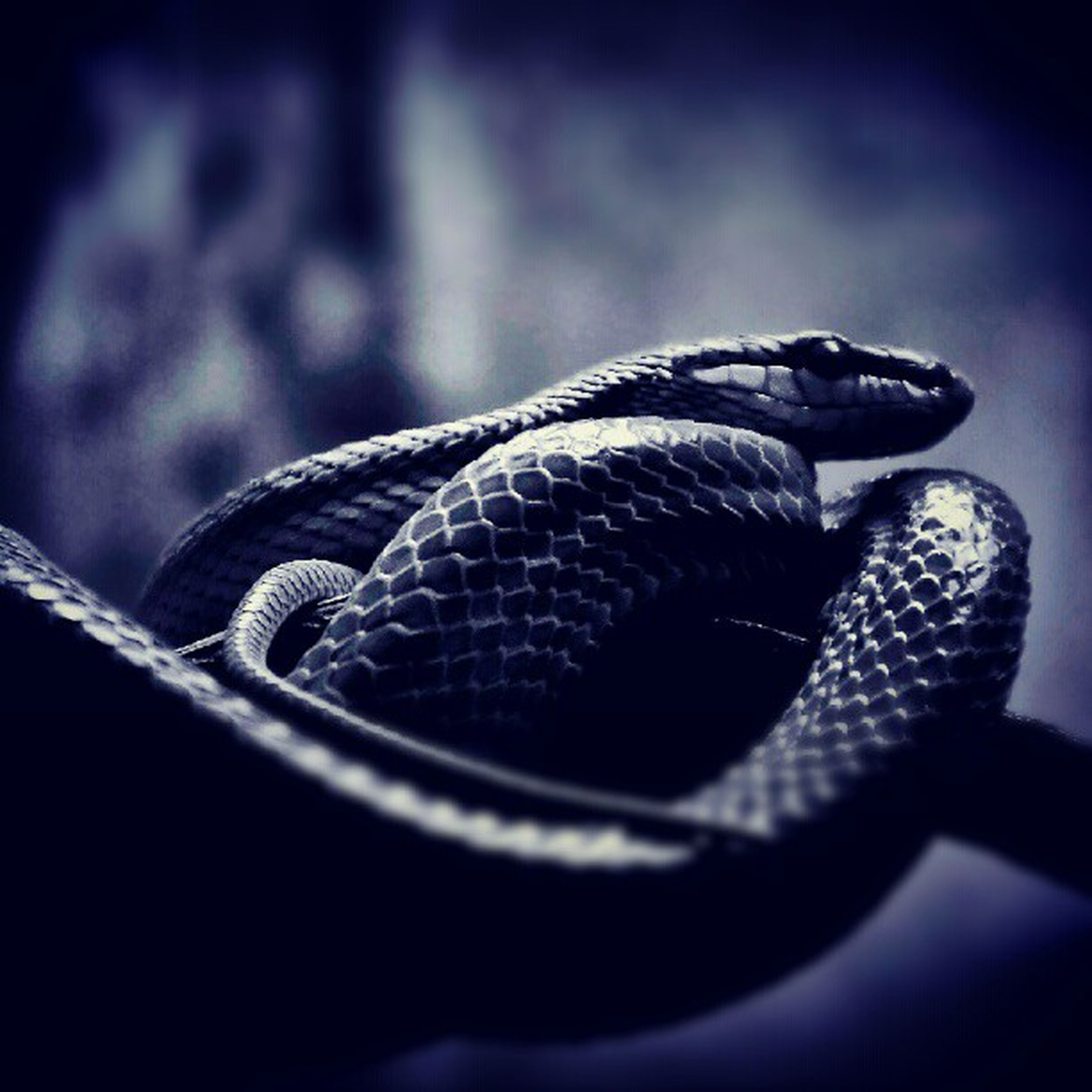 one animal, animal themes, close-up, focus on foreground, animals in the wild, wildlife, reptile, selective focus, animal body part, no people, outdoors, metal, animal head, day, nature, rope, snake, sunlight, side view, part of