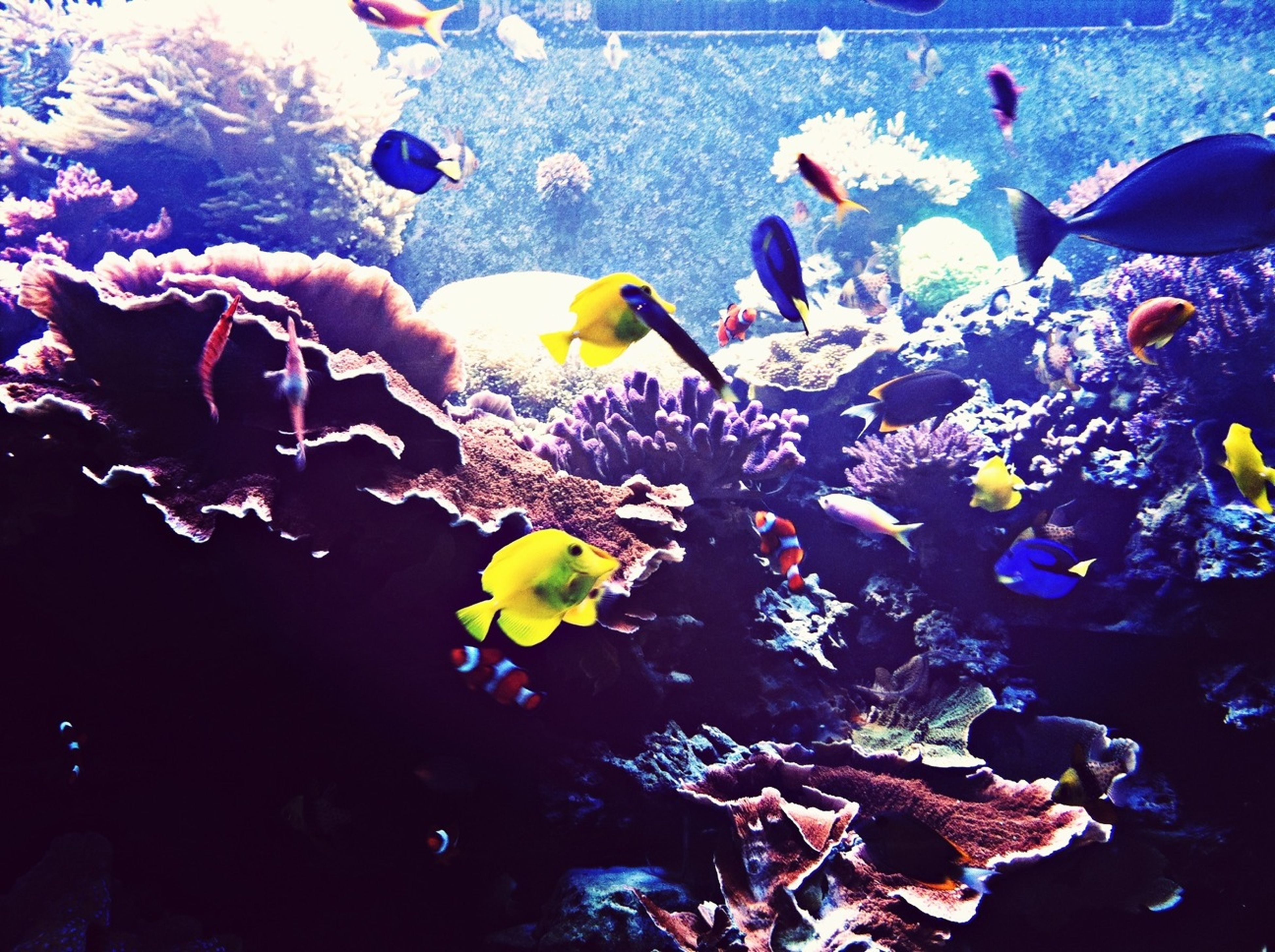 water, high angle view, multi colored, fish, underwater, swimming, sea, sea life, variation, nature, animal themes, school of fish, undersea, blue, floating on water, no people, beauty in nature, abundance, outdoors