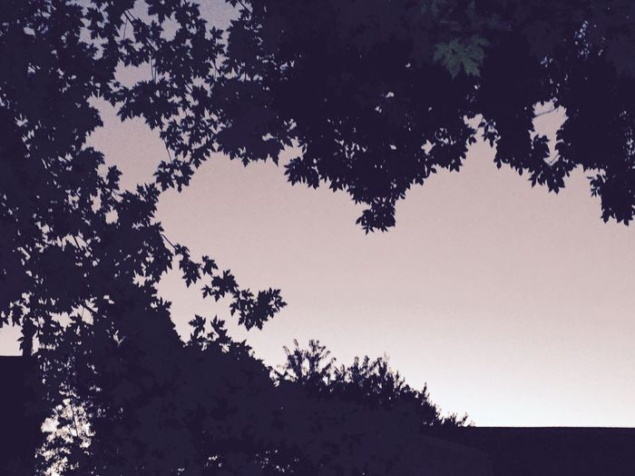 Simplistic fall evening Silhouette Nature