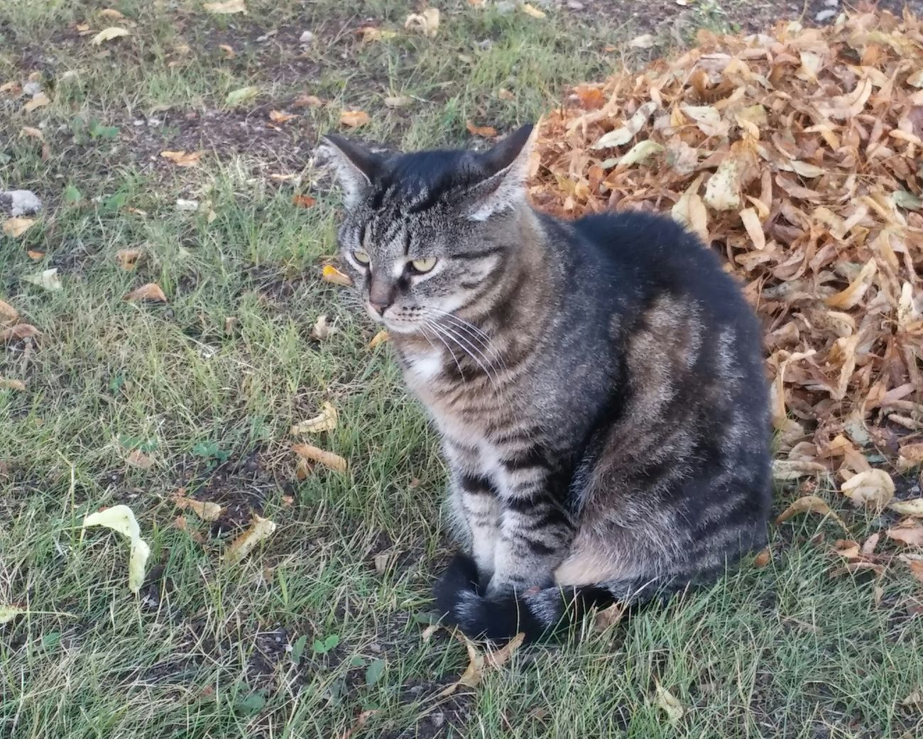 Cat Cat♡ Cats Velikiy Novgorod