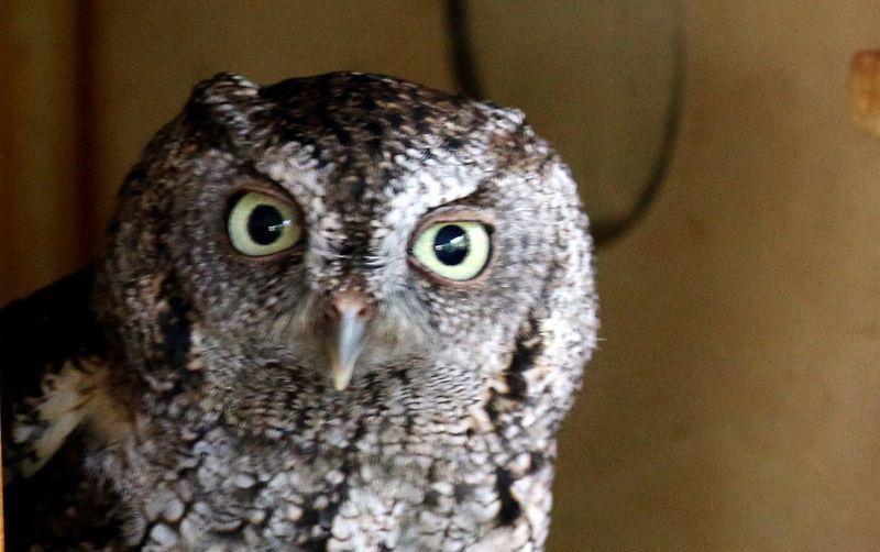 Owl Big Eyes I'm Watching