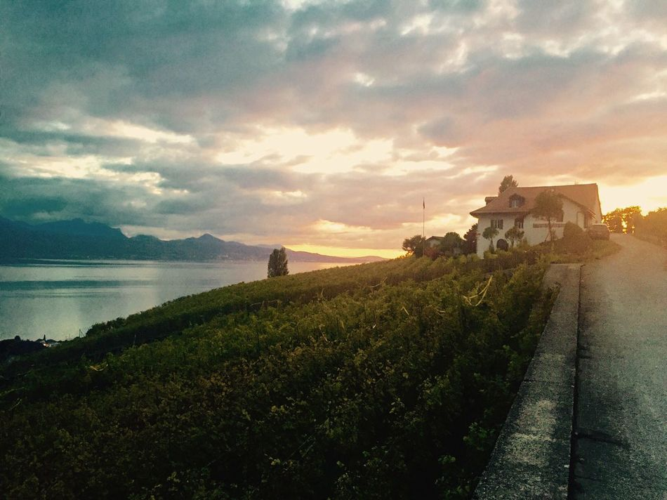 Architecture Building Exterior Built Structure Sky Nature Sunset Lausanne (CH) Switzerland Cloud - Sky Leisure Activity Illuminated Beauty In Nature Lake Vineyards  Beauty In Nature Outdoors No People Plant Tree Mountain Day