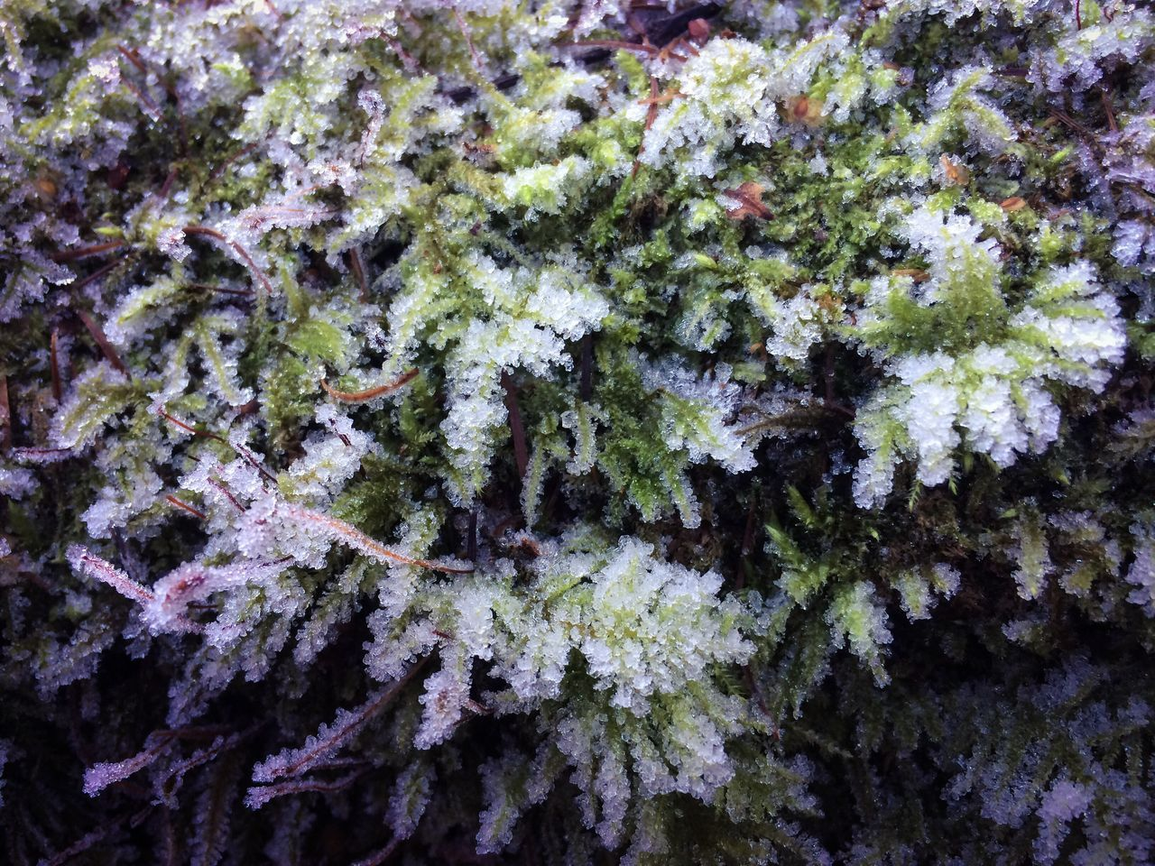 growth, nature, lichen, plant, full frame, no people, close-up, tree, outdoors, fragility, beauty in nature, day, freshness