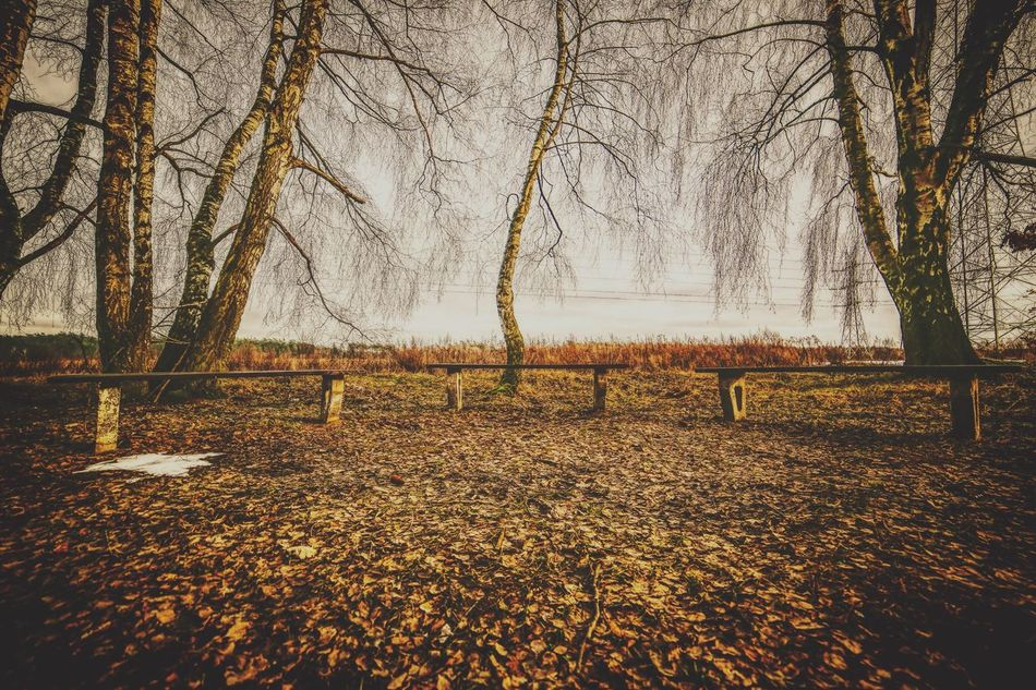 Bare Tree Tree Autumn Tree Trunk Branch Nature Tranquility Change Landscape Beauty In Nature Outdoors No People Tranquil Scene Day Scenics Cold Temperature Winter