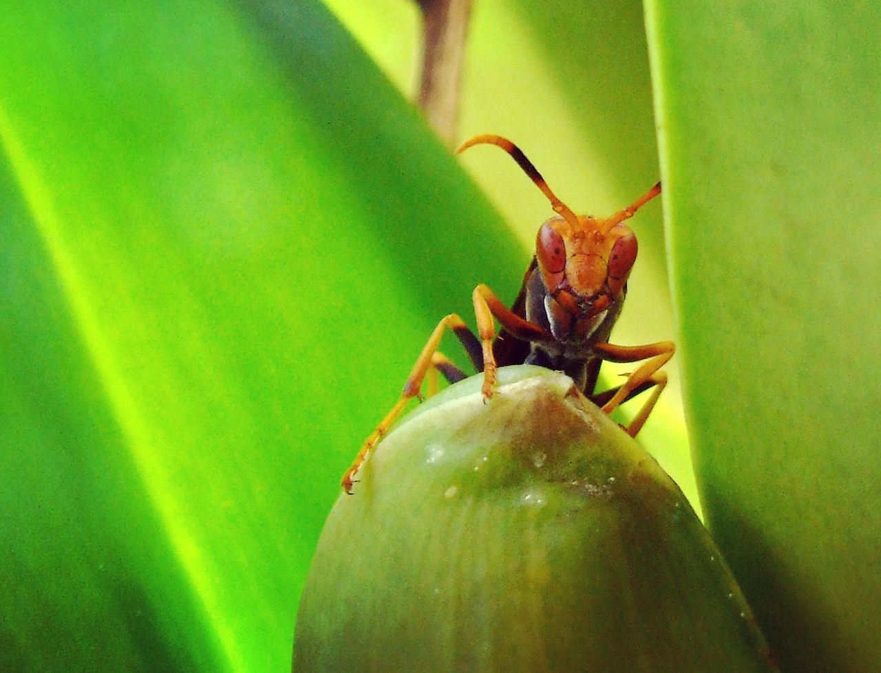 Safuca Photography Close-up Insect One Animal Nature Green Color Animal Themes Animal Wildlife