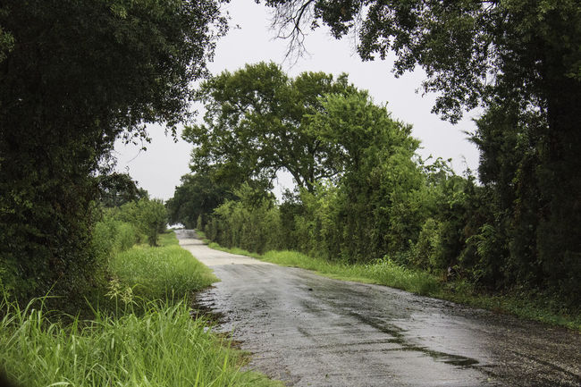 """A Distant Journey"" Photographed in Texas by a Canon EOS Rebel T5 Backroads Green Nature Peace And Quiet Rainy Days Road Roadtrip Trees"