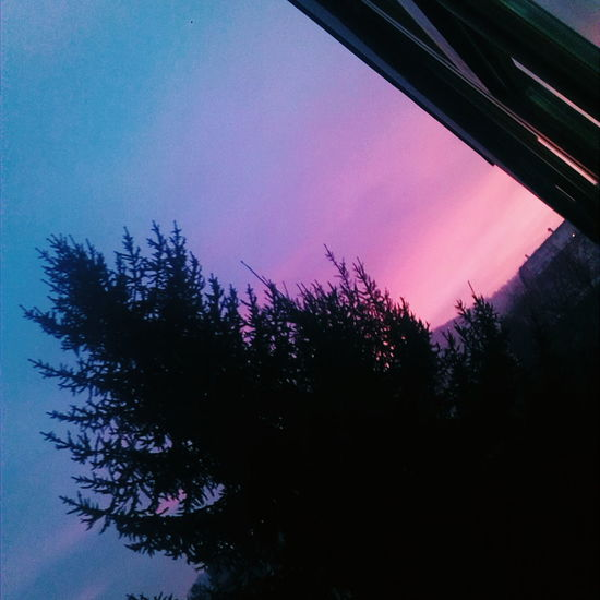 Sunsest Pink Sky Nature Photography Nature Tree Night Beautiful Nature Relaxing