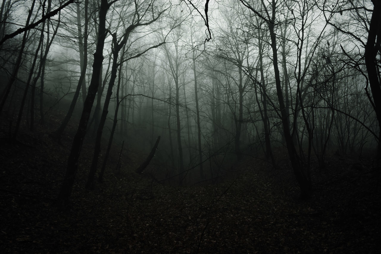 Dark Hollow. Tree Forest Nature WoodLand Fog Beauty In Nature Morning Landscape Scenics Growth Wilderness Branch Outdoors No People Tree Area Sky Day Foggy Dark Light And Shadow Pennsylvania EyeEm EyeEm Best Edits Low Key Tranquility