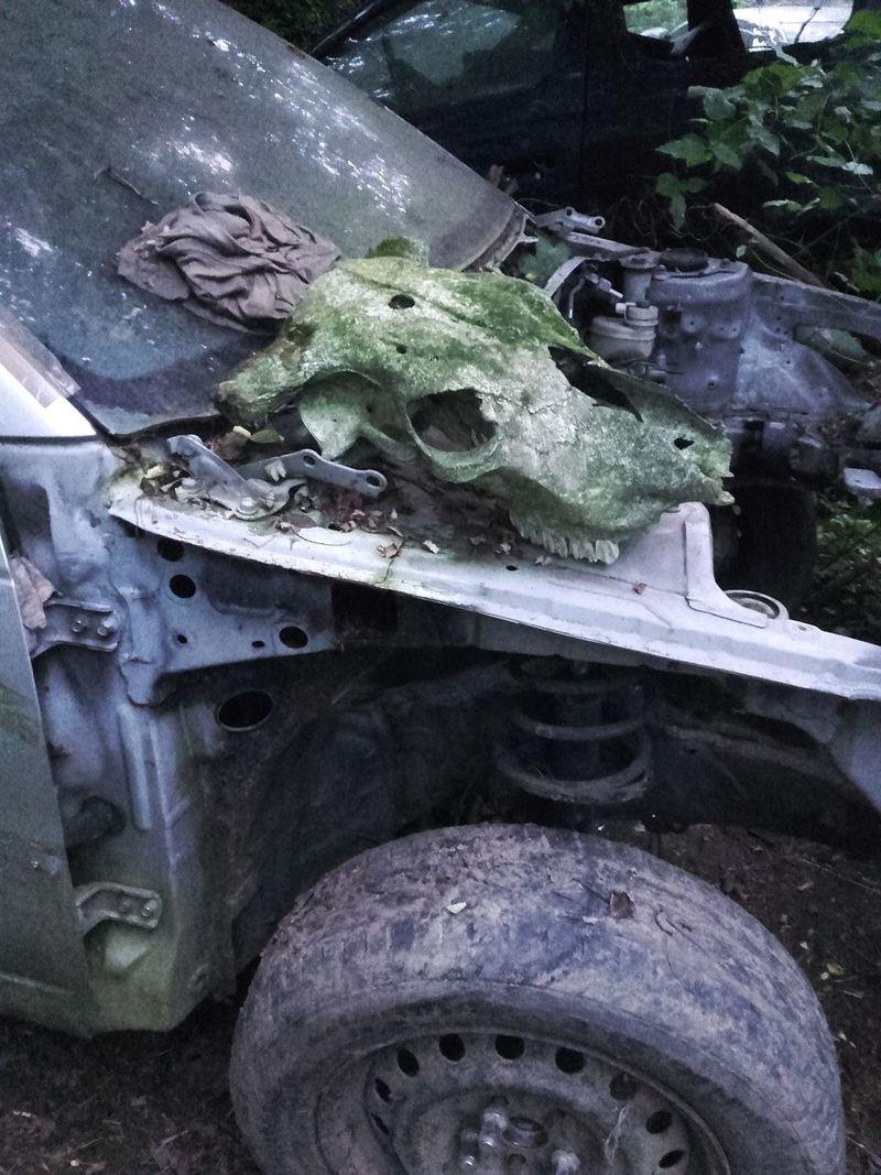 Deer Skull Animal Skull Broken Broken Car Car Wreck Close-up Deer Deer Skull Deerskull Deterioration Dirty Green Color Junkyard Metallic No People Old Outdoors Run-down Skull Skull Of An Animal