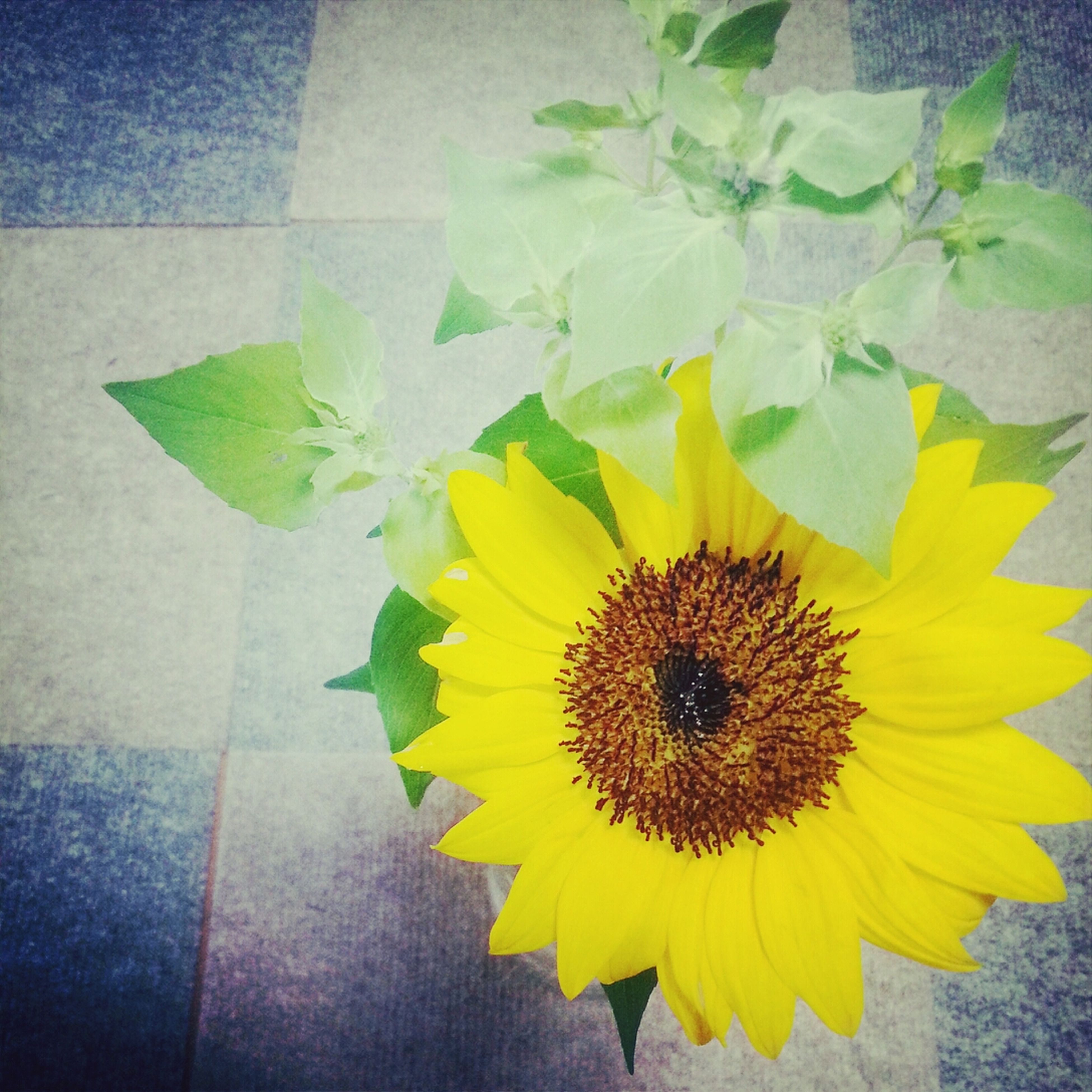 flower, yellow, petal, flower head, freshness, fragility, indoors, plant, leaf, wall - building feature, potted plant, close-up, vase, growth, sunflower, high angle view, pollen, decoration, beauty in nature, nature