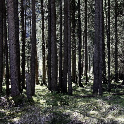light and trees, full frame view of a forest Alps Beauty In Nature Colors Darkness And Light Day Forest Full Frame Growth Landscape Light Light And Shadow Nature No People Outdoors Scenics Sky Sun Tannheimer Tal Tirol  Tranquil Scene Tranquility Tree Tree Trunk Trees Vilsalpsee