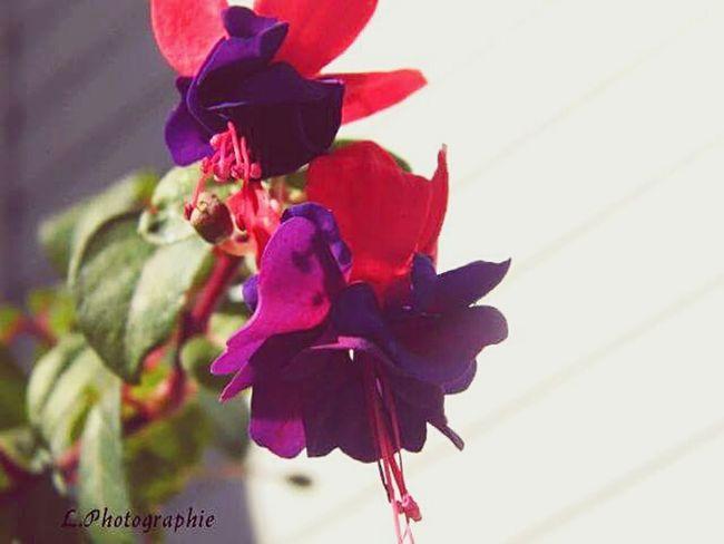 🌷 Flowers 🌹 L.photographie