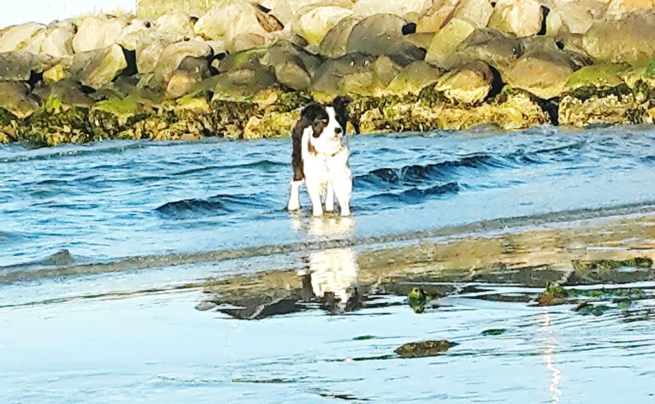 The Week On Eyem 25 The Essence Of Summer The Following Sunny Afternoon By The Water My Dog
