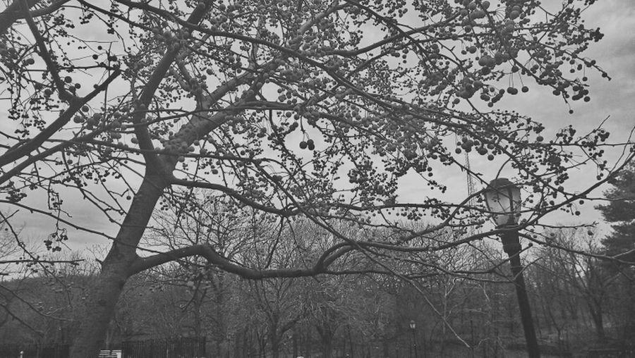 Mute Blackandwhite Monochrome Bronx River Park
