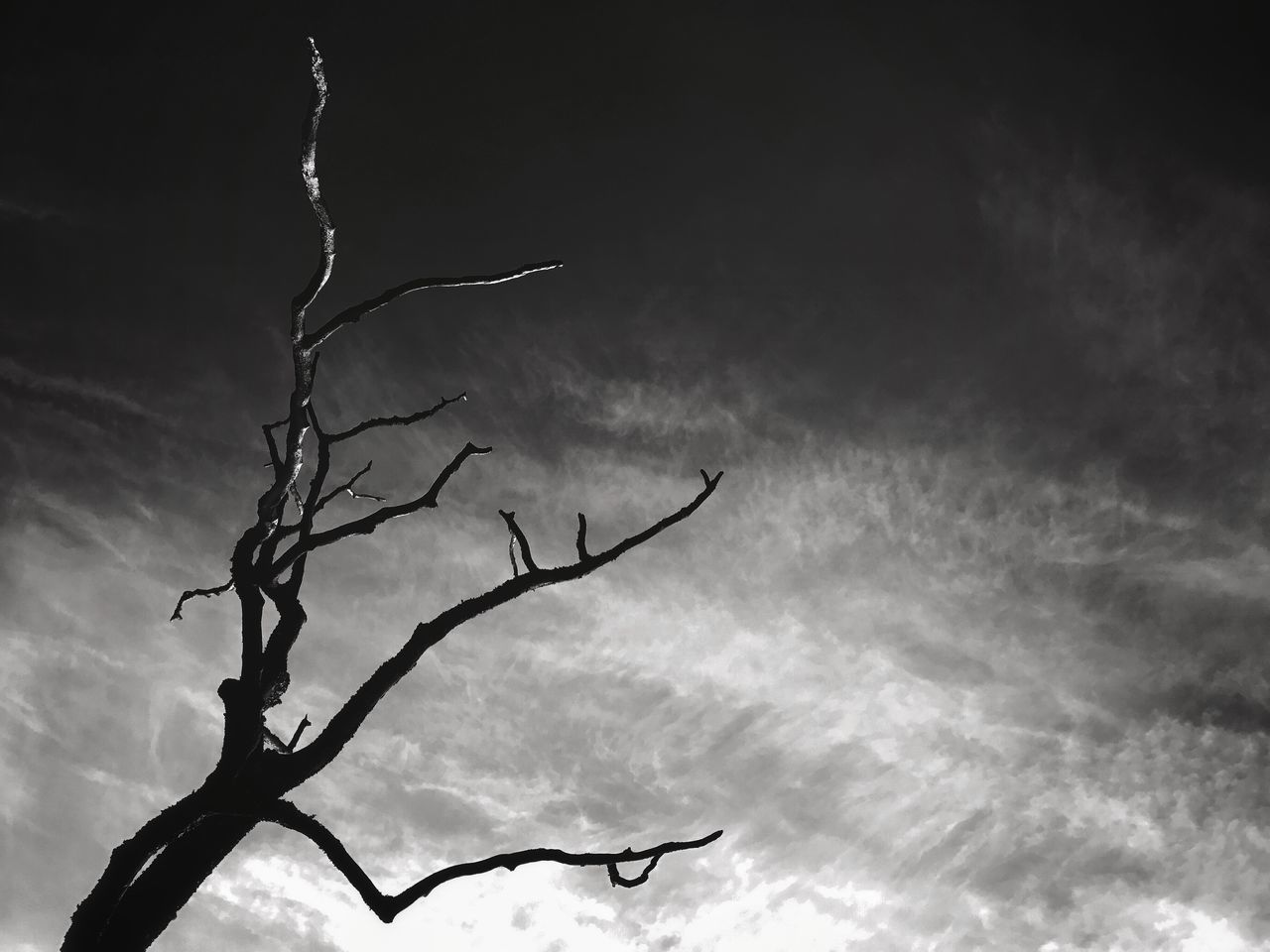 Bare Tree Black Black And White Blackandwhite Branch Cloud - Sky Dark Day Low Angle View Nature No People Outdoors Silhouette Sky Storm Cloud Tree