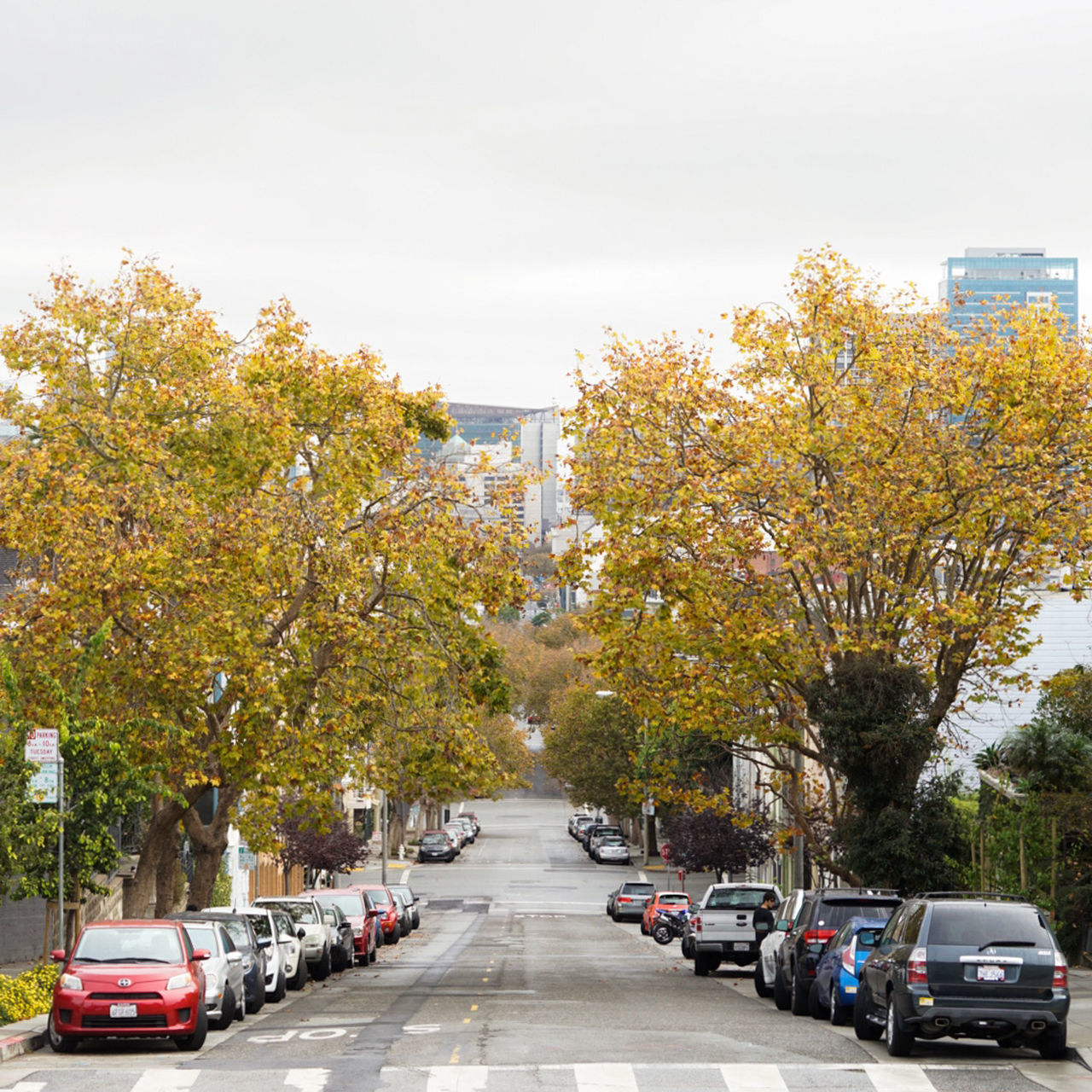 car, tree, transportation, land vehicle, street, change, road, mode of transport, autumn, day, outdoors, no people, architecture, nature, city, sky