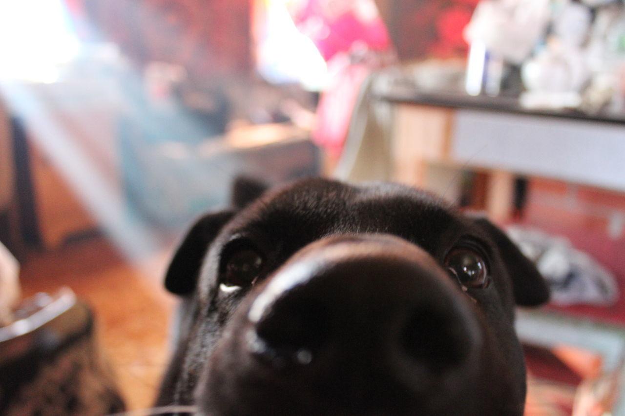 Domestic Animals Macro Dog Nouse