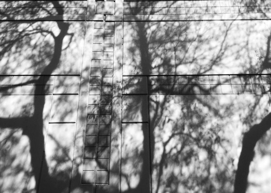 Tree Shadows Playing With The Shadows Playing With The Light Trees Tree Branch Patterns