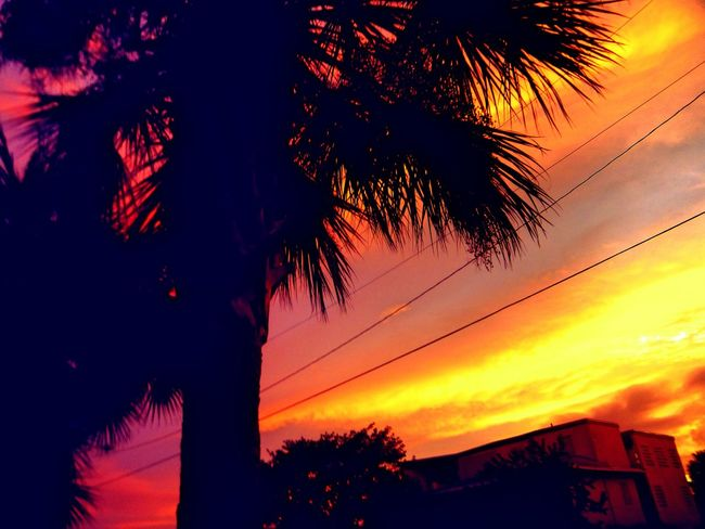43 Golden Moments Beautiful Sky Beauty In Nature Colorful Sunset Feel The Journey Florida Sunset Gold Nature_collection Perfect Sky Shot Of The Day Sky_collection Skyporn Sunset Sunset_collection