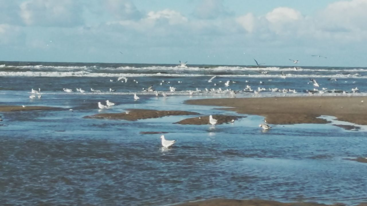 water, nature, beauty in nature, scenics, tranquility, sky, sea, beach, no people, day, tranquil scene, large group of animals, cloud - sky, outdoors, horizon over water, animal themes, bird, swimming, animals in the wild, wave