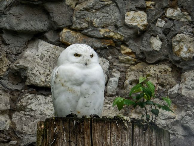 Bird One Animal Animal Themes Owl Zoo Moscow Zoo птица Сова зоопарк московскийзоопарк