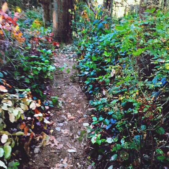 Plant Growth Footpath Forest Nature Tranquility Scenics Beauty In Nature Outdoors Plant Life Veiwpoint Of A Homeless Seattle Girl ShotoniPhone6s Puget Sound, Washington