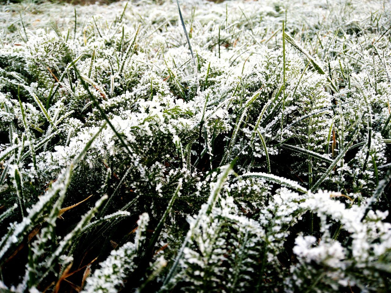 Winter is here! Nature Growth Grass Plant Beauty In Nature No People Outdoors Tranquility Close-up Day Freshness Nature Photography Amazing View Nature_collection Amazing_captures Taking Photos Enjoying The Sun AndroidPhotography Sun My Year My View Wet Raindrops Freezing Freezing Cold Freezing ❄