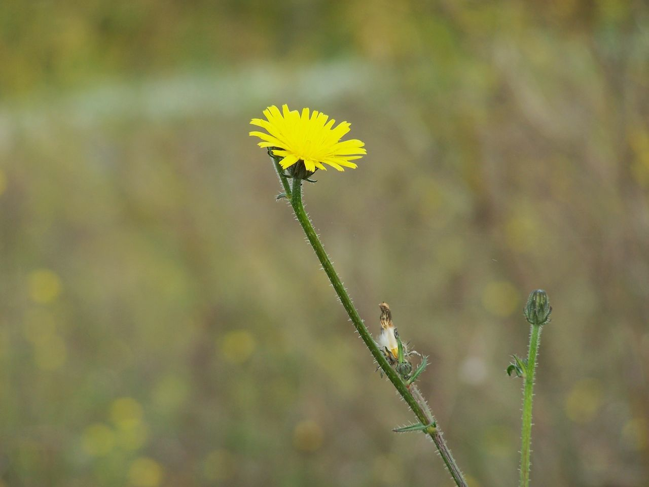 flower, nature, yellow, plant, growth, beauty in nature, fragility, day, one animal, outdoors, focus on foreground, animal themes, petal, close-up, no people, animals in the wild, flower head, freshness, blooming