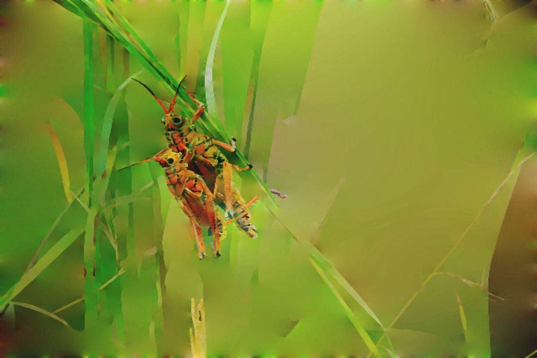 Just a little fun. Abstract Icolorama Insect Nature Never Ceases To Impress Me With Its Beauty Animal Behavior Nature Photography