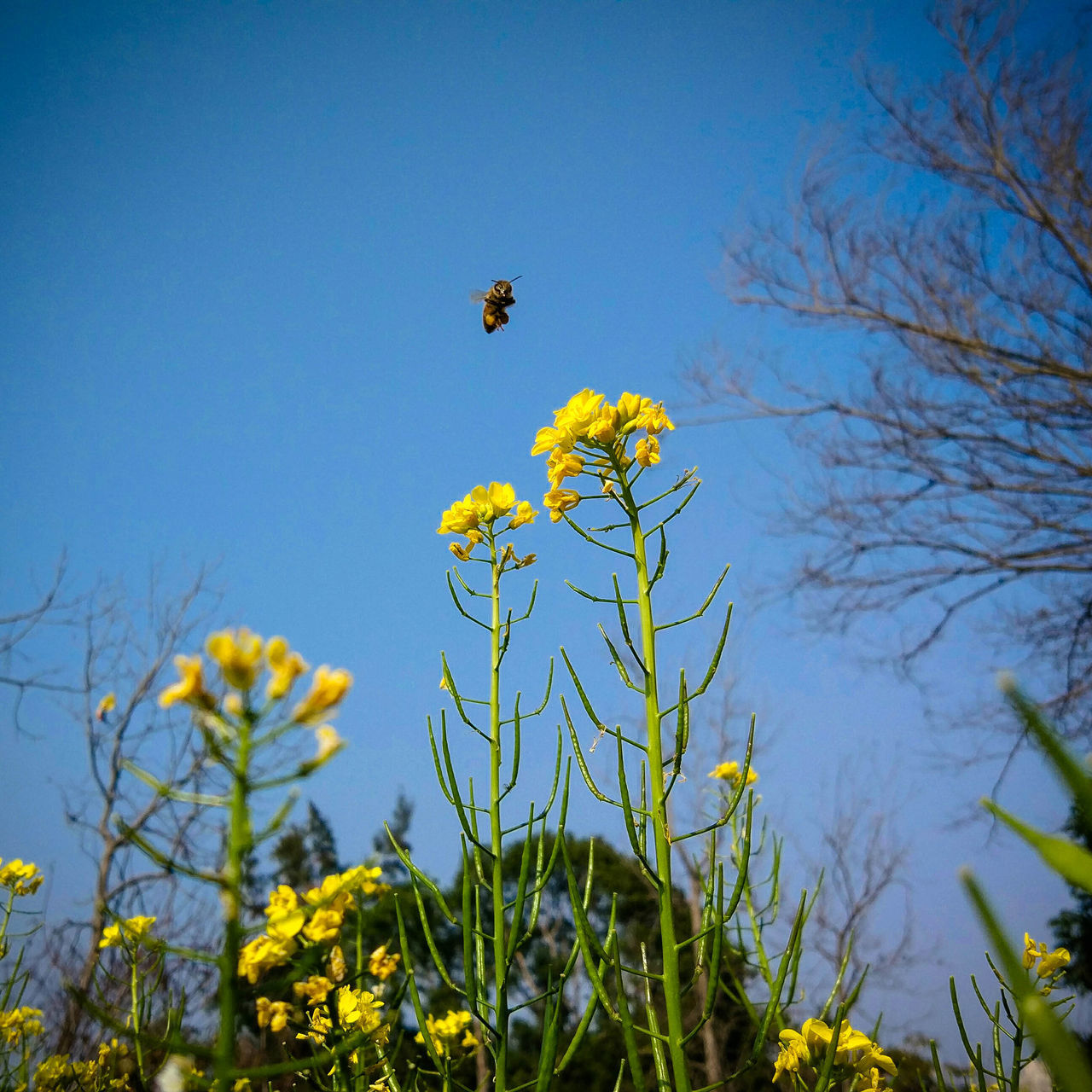 Blue Nature Yellow Sky Beauty In Nature Flower No People Plant Outdoors Bee 🐝 MIphotography Flower Photography Flowers, Nature And Beauty Low Angle View Day