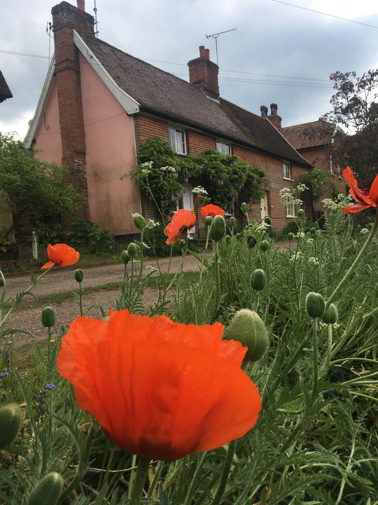 Poppy Flower Suffolk village Nature Architecture Cottage